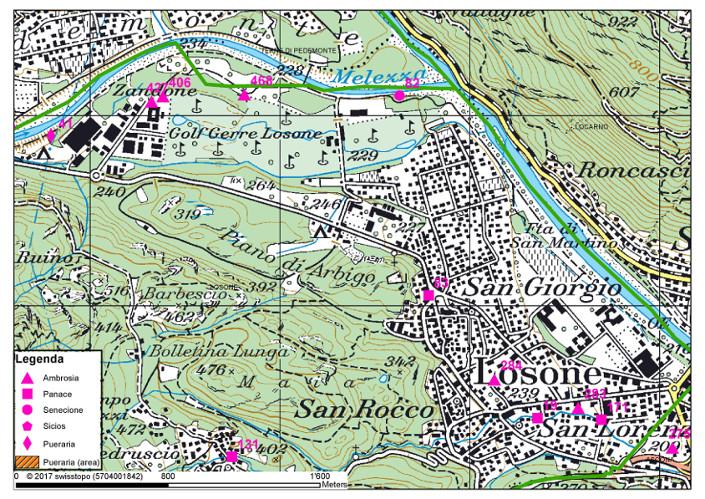 Mappa dei focolai delle piante invasive a Losone